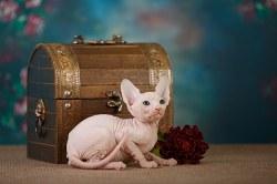 Котик белый